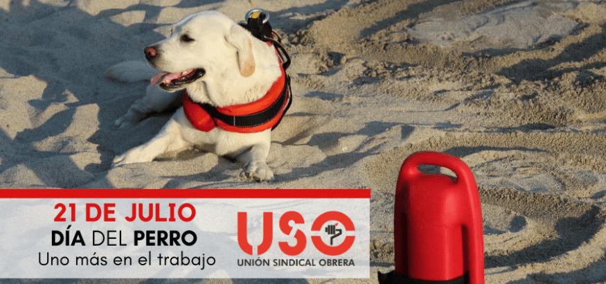 Prevención de riesgos laborales en el trabajo con perros